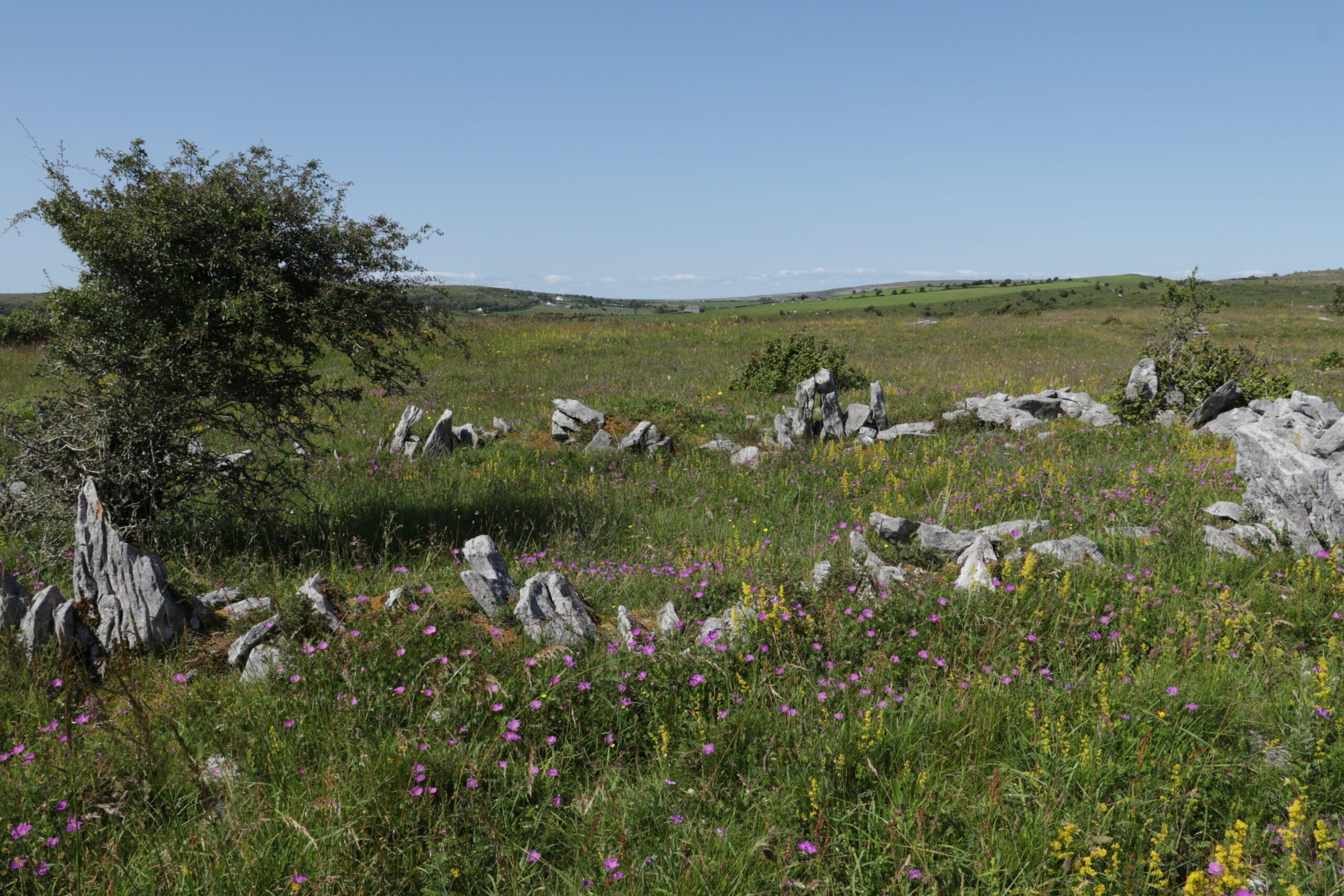 Burren Flowers, Co. Clare
